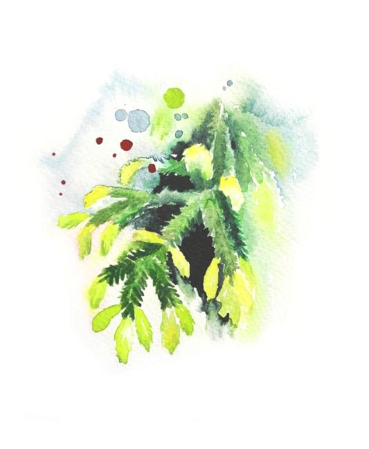estervisual-kuusenkerkkä-wildfromarctic