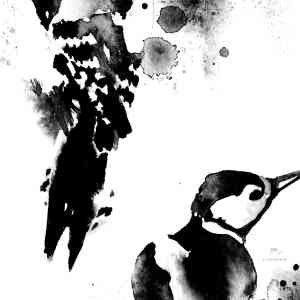tikat-mustavalkoinen-50x50